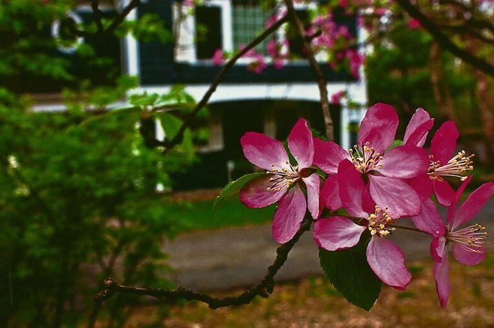 Flower Home - Chrissy Kazmer