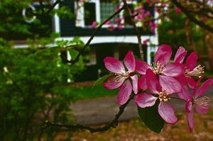 Flower Home