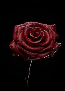 Decay Rose I