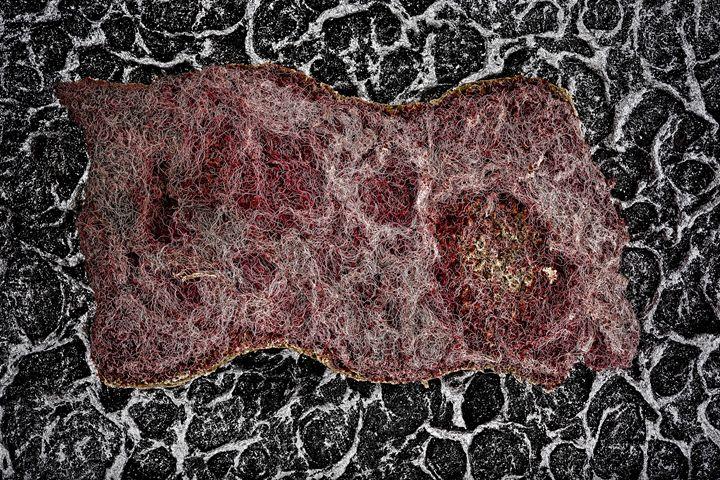 sponge - Marco Moroni Photography