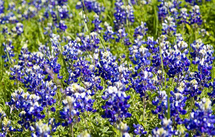 Vibrant Spring Flowers in full bloom - Elite Image Photography