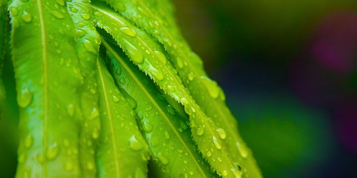 Tropical Green Leafs after a Rainfal - Elite Image Photography