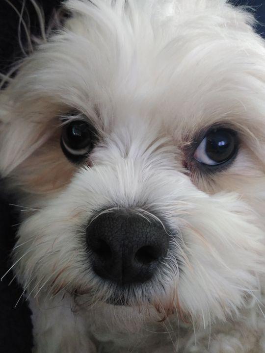 hello teddy bear pup - Renee Marie D