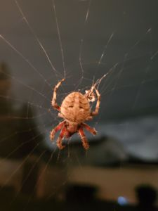 Spinny the Spider - Renee Marie D