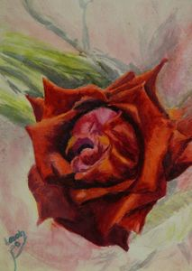 Midday Rose