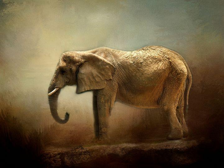 Elephant - LilaUrdaPhotography