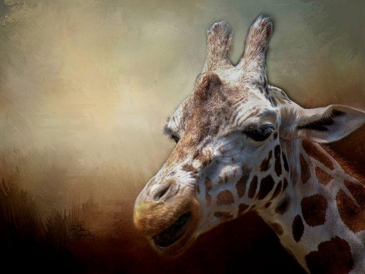 Giraffe - LilaUrdaPhotography