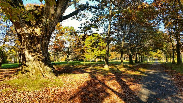 Autumn Esplanade - ShuroVista