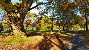 Autumn Esplanade