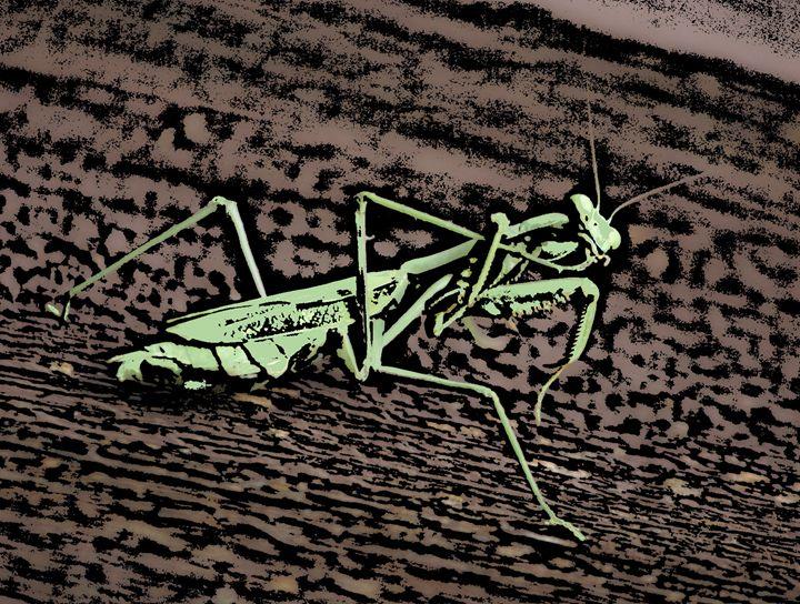 Preying Mantis - Paizley's Digital Art