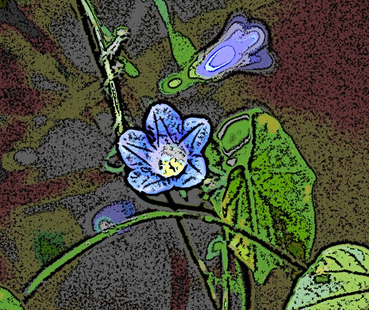 Morning Glory - Paizley's Digital Art