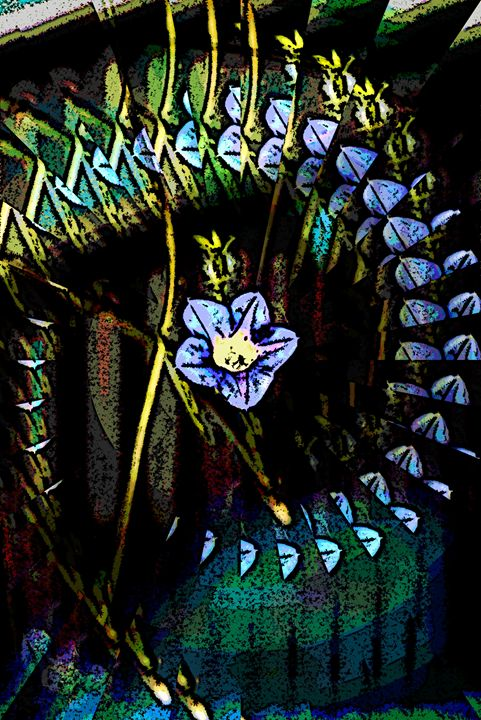 Morning Glory - Paizley's Digital Art