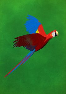 Guacamaya - Macaw
