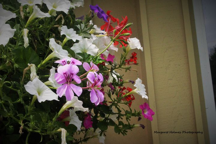 Pretty Flowers - Fly High Photography