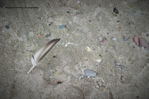 Feather On A Beach
