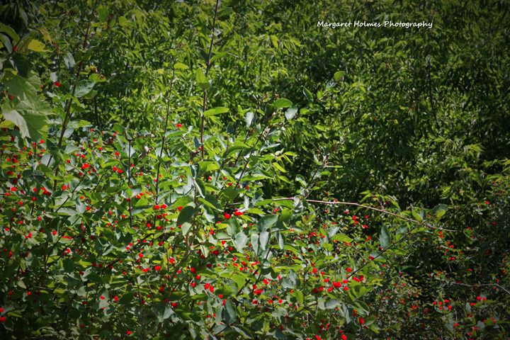 Berry Bush - Fly High Photography