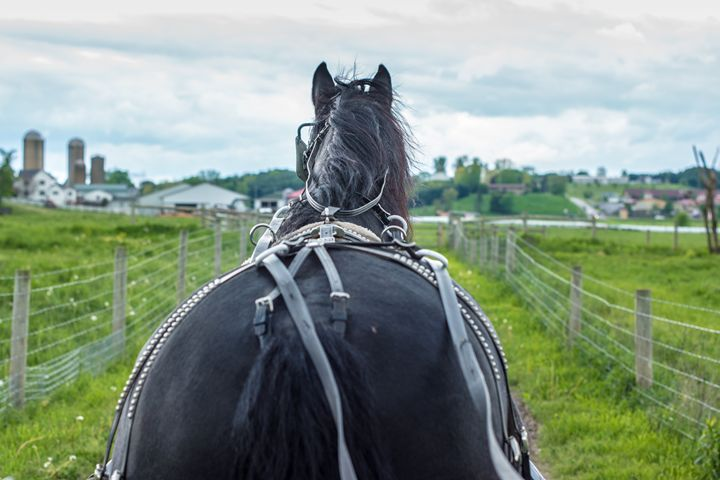 Buggy Ride with the Handsome Horse - My Captures