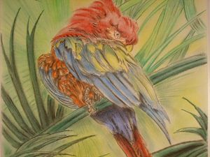 my parrot - paul a. williams