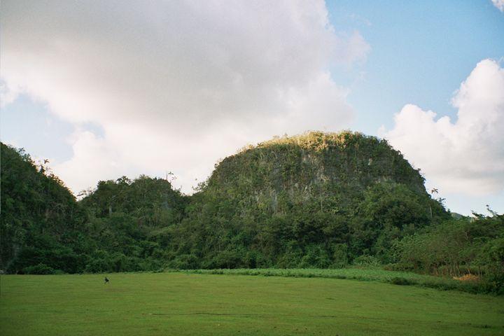 Forest hills, Cuba - John Brooks Art & Photography