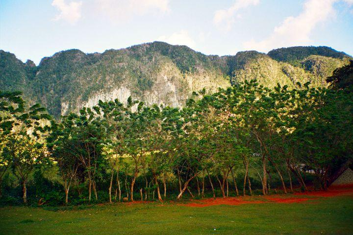 Mountains & forest, Cuba - John Brooks Art & Photography