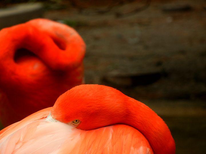 Flamingo - Perdidos