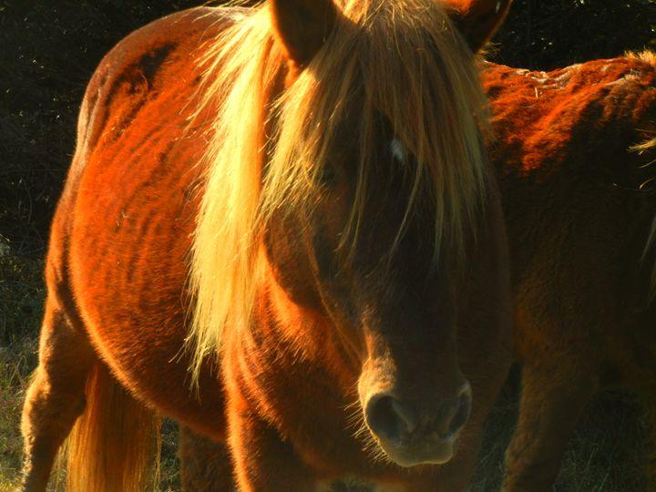Wild Pony - Perdidos