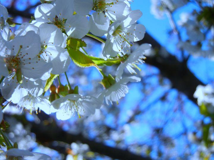 Blossoms - Perdidos