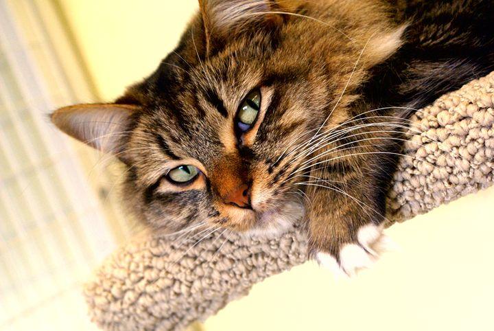Cat - Perdidos