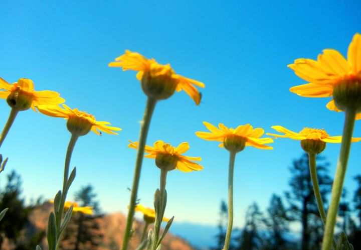 Wildflowers - Perdidos
