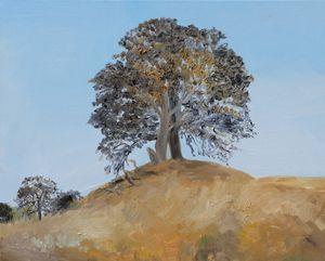 California Oak Tree