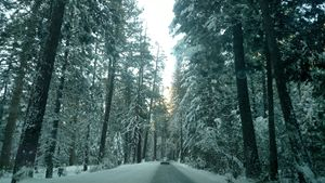 Driving through a Winter Wonderland