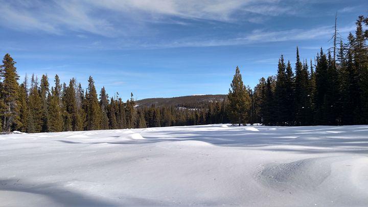 The Resting Lake - Tiffani Burkett