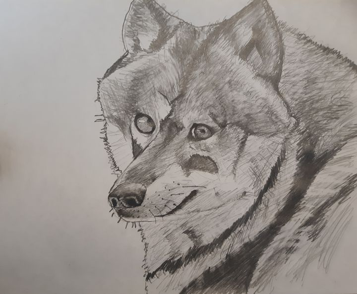 Sketch of a Wolf - Walter Gordon