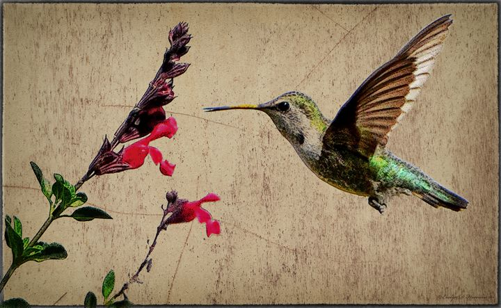 Patagonia Hummingbird (7500) - Pause4Prints