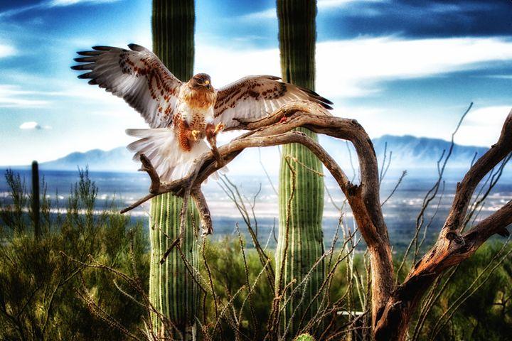 Desert Landing (5126) - Pause4Prints