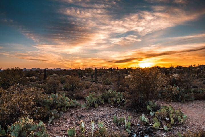 Desert Delight - Sanscrainte Studios