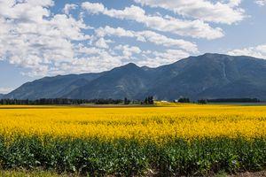 Montana Mellow