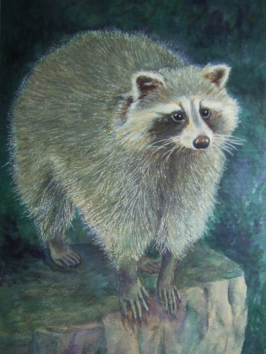 Raccoon - CarmenArt