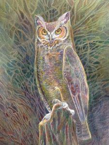 Sandy's Owl