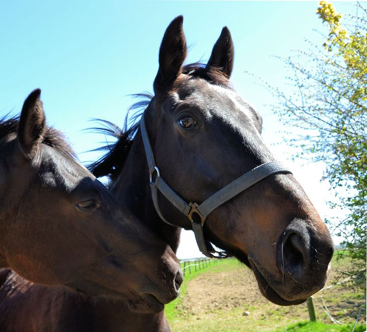 Horse - Toni Sanders