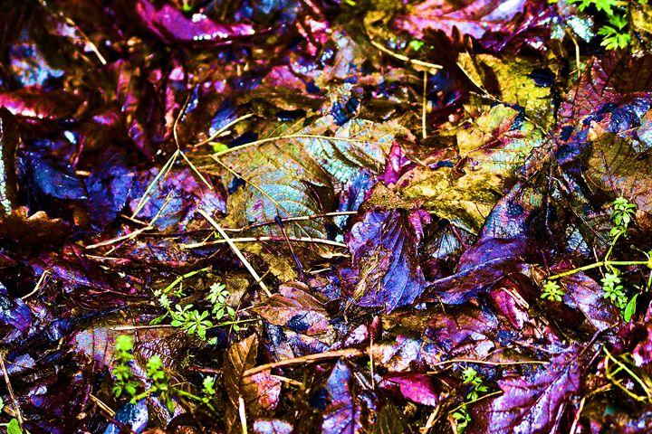 Matallic Leaves - Toni Sanders