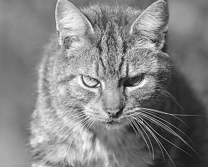 Cat - Toni Sanders