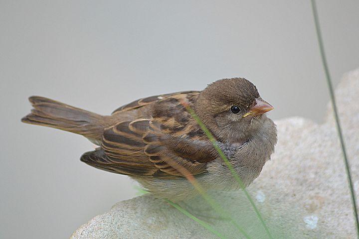 Bird - Toni Sanders
