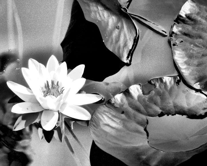 Lily - Toni Sanders