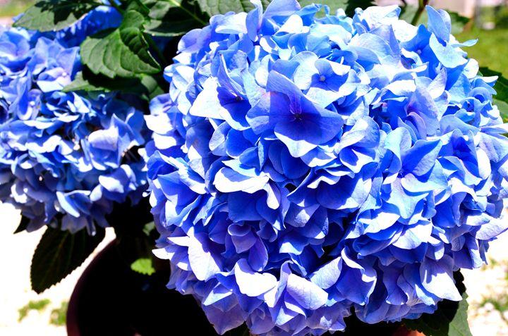 Blue flowers - Leslie AR