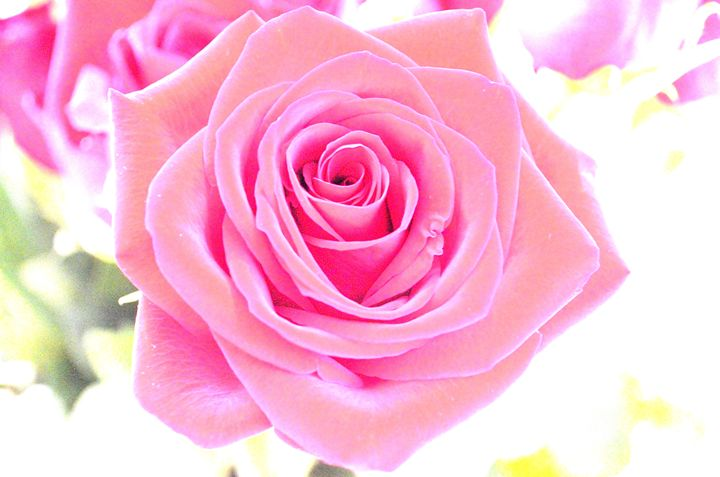 Beautiful Rose - Leslie AR