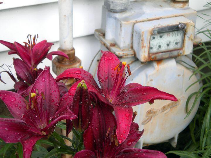 Gage Lilies - Gretchen Sager