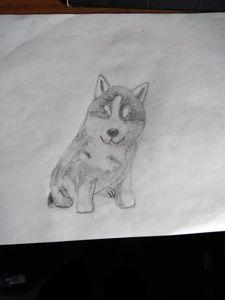 Caden's design husky