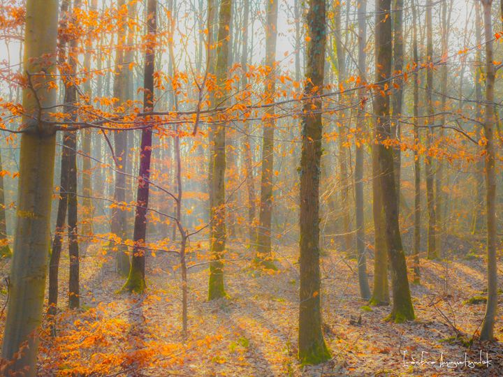 Sunny Sunday morning in the woods - IrènEve Augustyniak