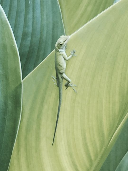 Larry the lizard - Painting and Photography by Julia Malphrus